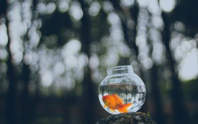 Tired of living in a goldfish bowl?
